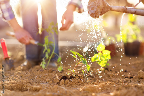 Senior couple watering seedlings in their garden Fototapet