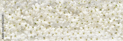 White cherry flowers panoramic background #82323591