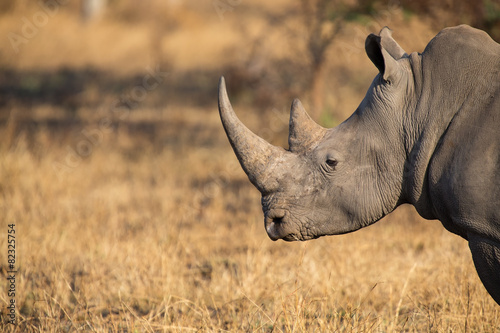 Spoed Foto op Canvas Neushoorn Lone rhino standing on open area looking for safety from poacher