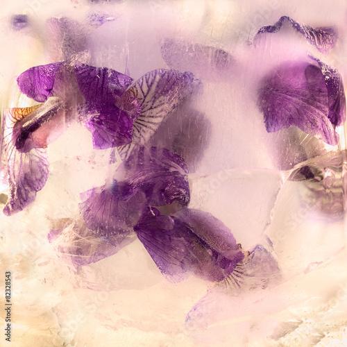 Spoed Foto op Canvas Iris Frozen flower of iris