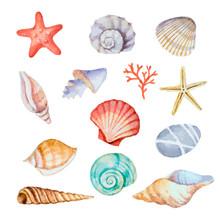 Watercolor Set Of Seashells
