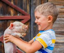 Boy With Piglet
