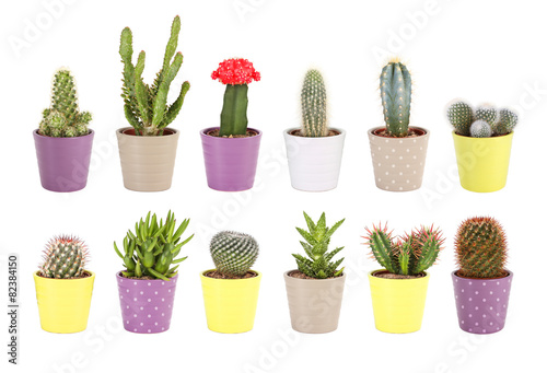 Papiers peints Cactus Cactus collection isolated. Aloe and succulents in ceramic pots