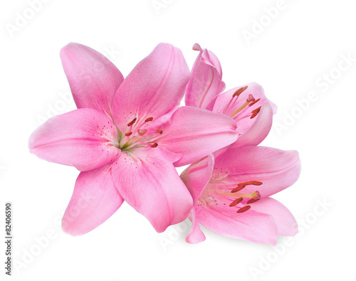 pink lilies on white background Fototapeta