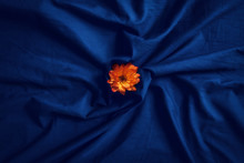 Yellow Flower On Blue Bed Sheet
