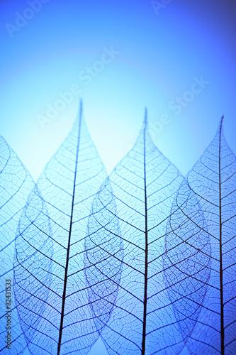 Poster Squelette décoratif de lame Skeleton leaves on blue background, close up