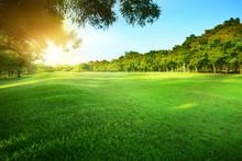Beautiful Morning Sun Shining Light In Public Park With Green Gr