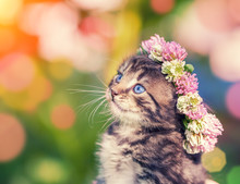 Cute Kitten Crowned With A Chaplet Of Clover