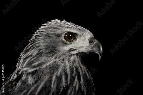 closeup hawk ,black and white Poster