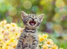 Cute Little Meowing Kitten In ...