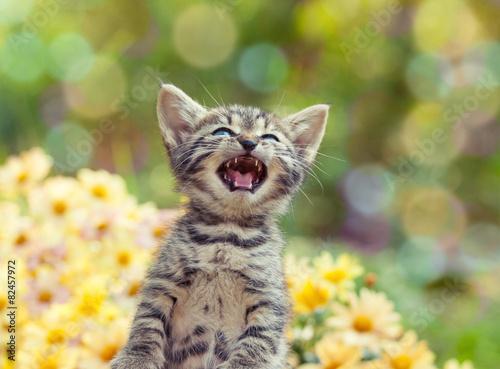 Canvas Print Cute little meowing kitten in the garden