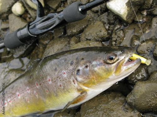 Fotobehang Vissen Trout fishing