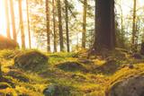Piękny las przy wschodzie słońca