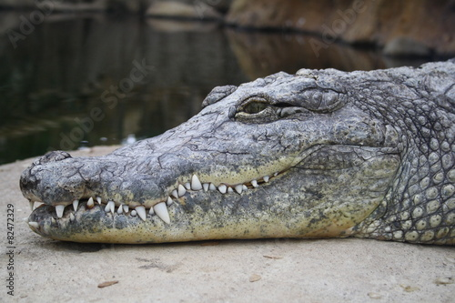 Door stickers Crocodile Krokodil