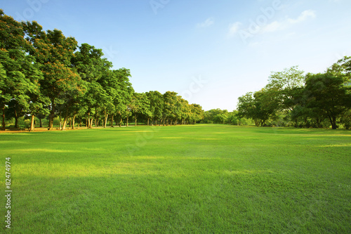 beautiful morning light in public park with green grass field an Fototapeta
