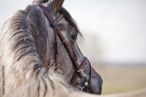 Photo  Portrait of a stallion