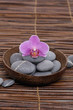 gorgeous orchid with gray stones in wooden bowl on mat