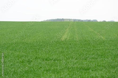 Poster Hill Green field
