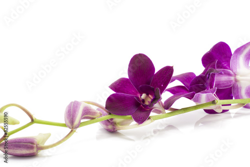 Branch blooming purple orchid