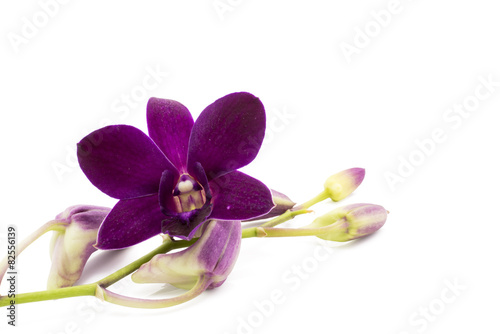 In de dag Orchidee Blossom purple orchid is isolate on whte background