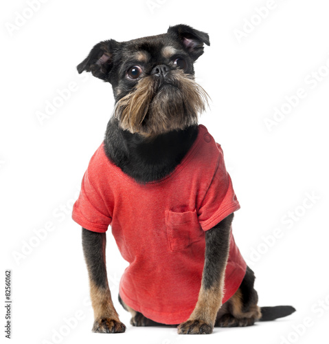 Deurstickers Franse bulldog Crossbreed dressed (8 years old) in front of a white background