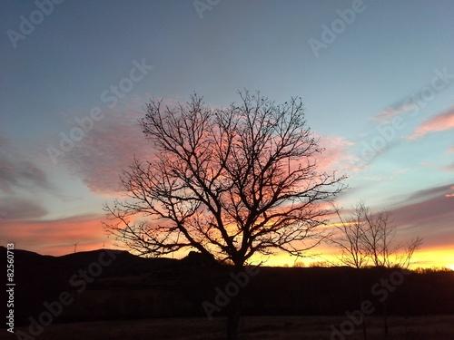 Staande foto Afrika Pôr do sol com silhueta de árvore.