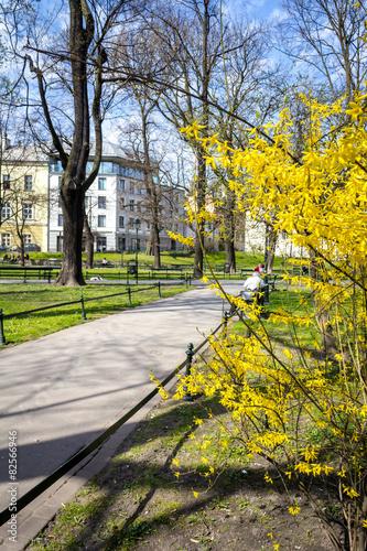 Planty park walk in springtime, Krakow Poland #82566946