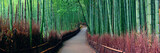 Fototapeta Bambus - Bamboo Grove