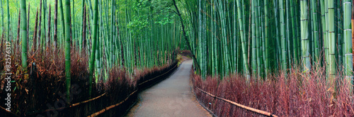 Photo Stands Landscapes Bamboo Grove