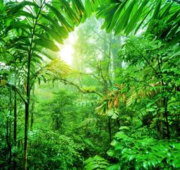 Fototapeta Optyczne powiększenie Fresh green rainforest