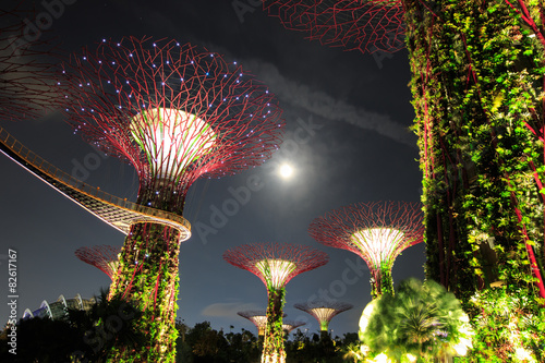 Canvas Prints Singapore Gardens by the Bay - SuperTree Grove in Singapore
