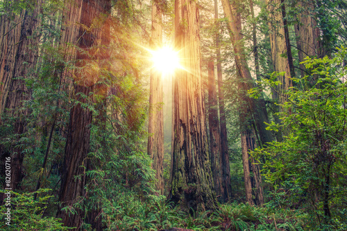 Door stickers Forest Sunny Redwood Forest