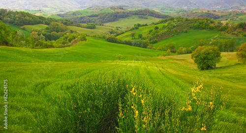 Foto op Aluminium Heuvel Zona di campagna marchigiana in primavera