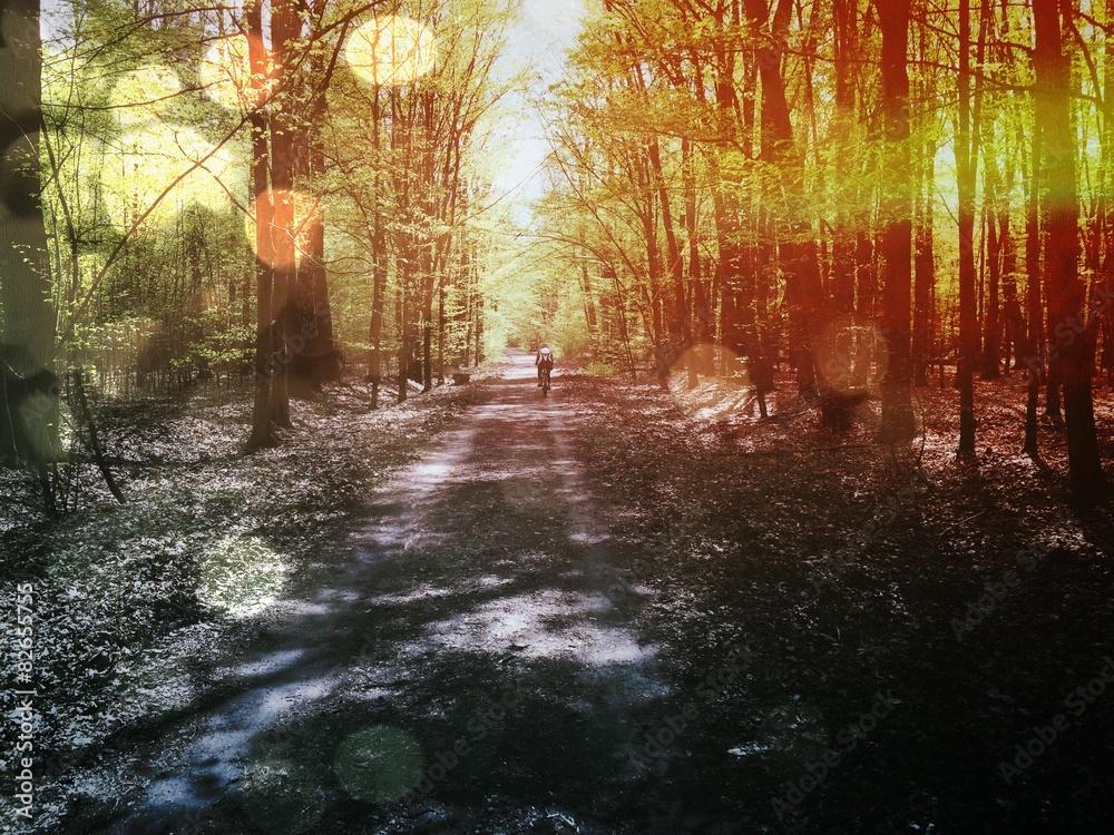 Fototapeta Forest Rider