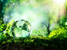 Crystal Globe On Moss In A For...