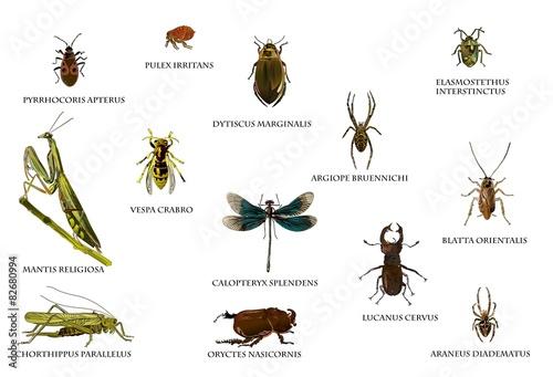 Fotografía  Insekten in Europa