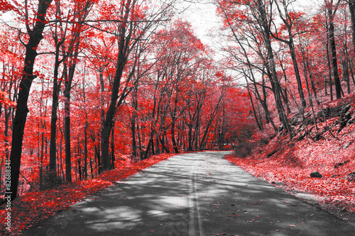 Autostrady przez czerwony las w czarno-biały krajobraz