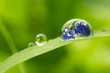 Leinwanddruck Bild - leaf with rain droplets - Recovery earth concept