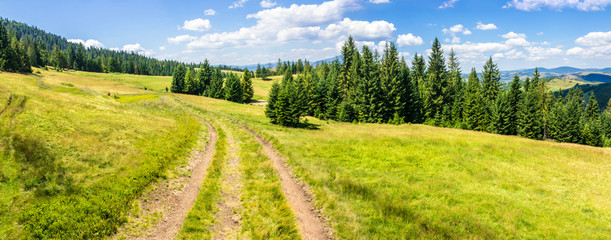 Obraz na Szklepath through meadow to forest in mountain