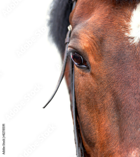 Staande foto Paardrijden Bay horse close up on a white background.