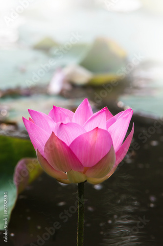 Foto op Canvas Lotusbloem Lotus flower closeup, vetical, center