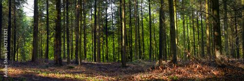 Fototapeten Wald Mixed forest