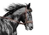 Portret konia w czerni i bieli w brązowej uzdzie - 82794175