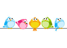 Cute Color Birds On White