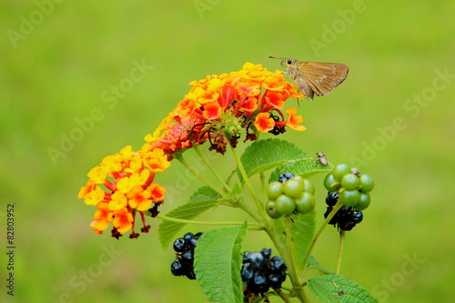flower and butterfly, and the other. © poripotto