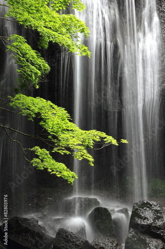 Fototapeta a maple tree and waterfall, silent summer day in Japan.