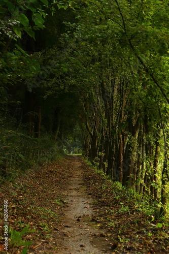 A silent mountain path in Japan. © poripotto