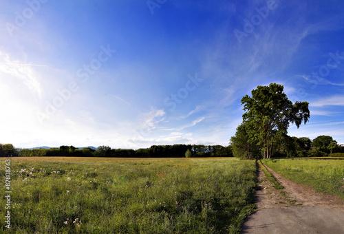 Foto op Aluminium Blauw tree in the field