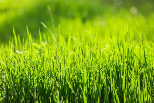 Fototapeta łąka trwa-wiosenna-na-lace