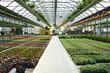 interno vivaio fiori e piante coltura